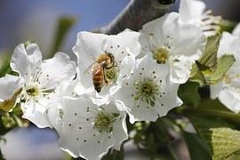 honeybee-1152581__180