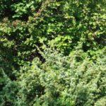 cespuglio della biodiversità